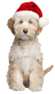 charlie-santa-hat